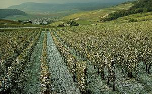 Colmar, capitale des vins d'alsace